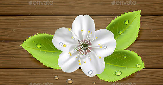 Box flower 20on 20wooden 20background1