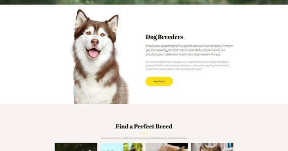 Box pupper dogs breeder premium moto cms 3 template 65296 original